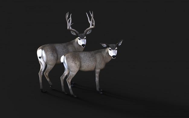 Ilustração 3d de vida selvagem de cervos-mula no oeste americano isolar em fundo preto com traçado de recorte