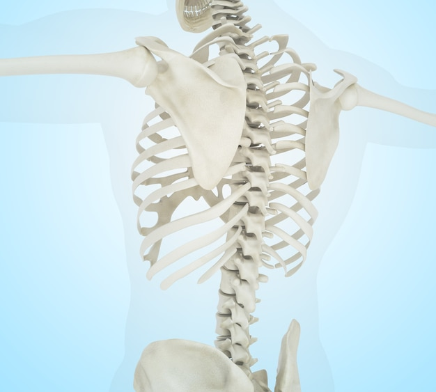 Ilustração 3d do esqueleto humano para trás