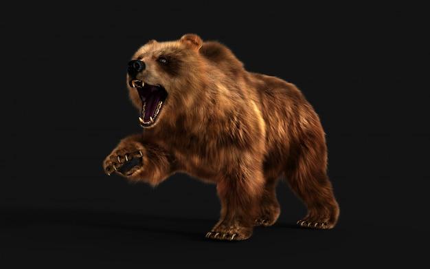Ilustração 3d grande postura do urso marrom isolada na parede escura com trajeto de grampeamento.