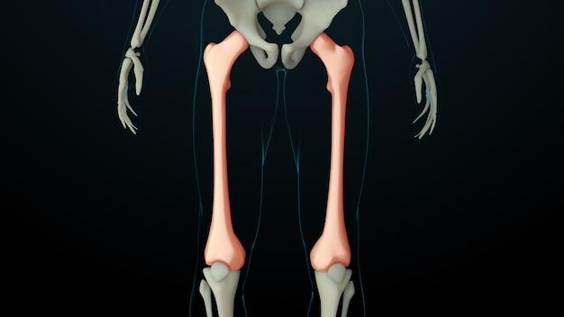 Ilustração 3d renderizada da estrutura do esqueleto com ossos feridos. a dor óssea é mostrada por um brilho vermelho. dor na seção da perna.
