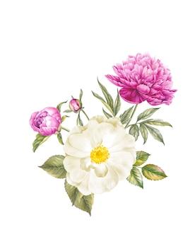 Ilustração botânica aquarela vintage.