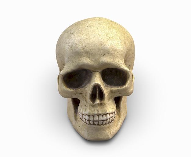 Ilustração d de crânio humano isolado no branco