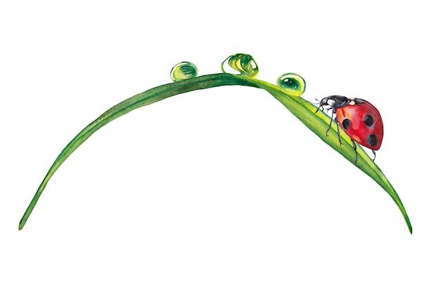 Ilustração da grama verde realista com gotas de orvalho e joaninha. pintura aquarela.