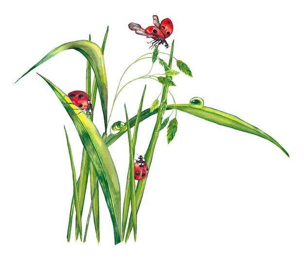 Ilustração da grama verde realista com gotas de orvalho e joaninhas. pintura aquarela.