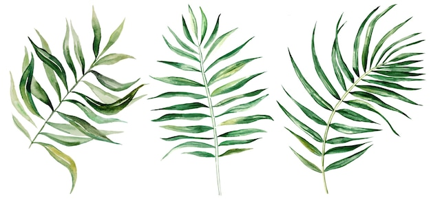 Ilustração de conjunto de folhas tropicais em aquarela