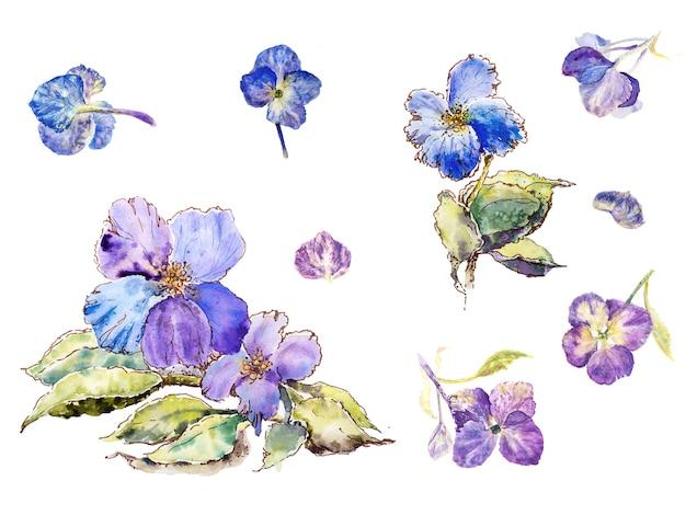 Ilustração de flores azuis e roxas isoladas em conjunto de fundo branco