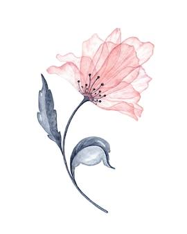 Ilustração de flores em aquarela transparentes elegantes