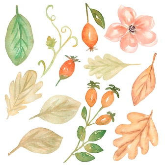Ilustração de folhas em aquarela