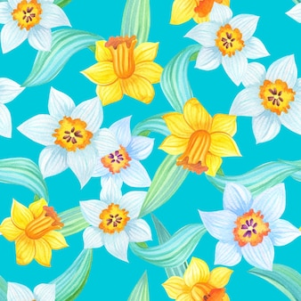 Ilustração de primavera com narcisos amarelos e brancos em azul