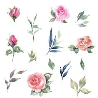 Ilustração do conjunto de folhas e rosas em aquarela desenhadas à mão