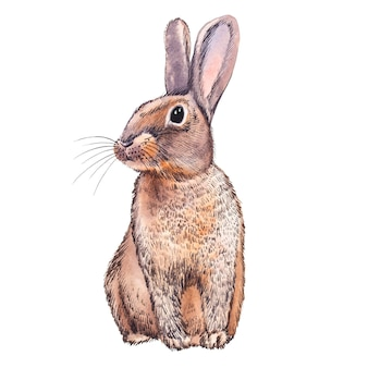 Ilustração em aquarela animal de coelho fofo. conjunto de páscoa. cartão de pintados à mão com símbolos tradicionais isolados no fundo branco. ilustração de coelho bebê fofo para o projeto.