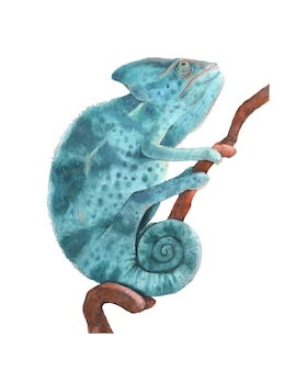 Ilustração em aquarela camaleão pantera azul isolada