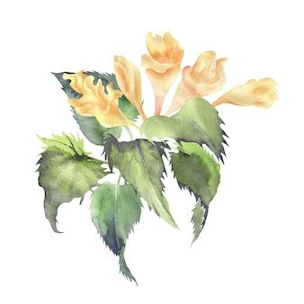 Ilustração em aquarela da planta mariannick asherah com flores