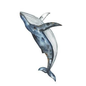 Ilustração em aquarela de baleia-jubarte pintada à mão, clipart de baleia, desenho animado animal subaquático