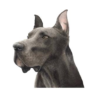 Ilustração em aquarela de cão dinamarquês