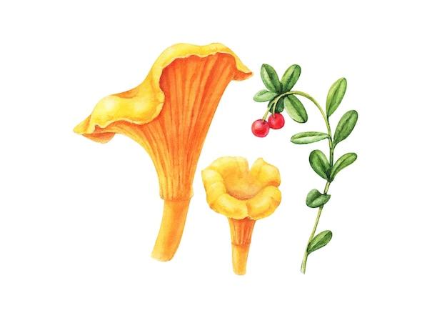 Ilustração em aquarela de cogumelo floresta amarela chanterelle isolada no branco