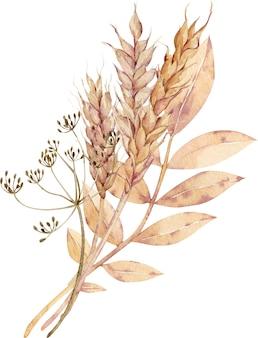 Ilustração em aquarela de espigas de trigo com flor de endro e folhas amarelas.