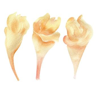 Ilustração em aquarela de flores bege