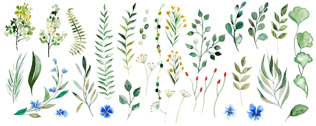 Ilustração em aquarela de folhas botânicas ilustração isolada