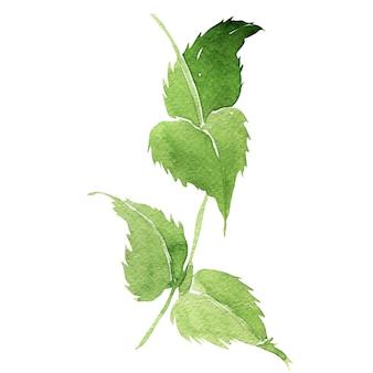 Ilustração em aquarela de folhas de mariannick asherah