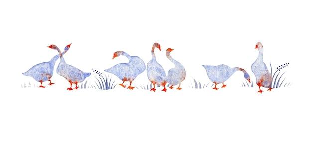 Ilustração em aquarela desenhada à mão de cisne de gansos azuis mordiscando a grama isolada no fundo branco
