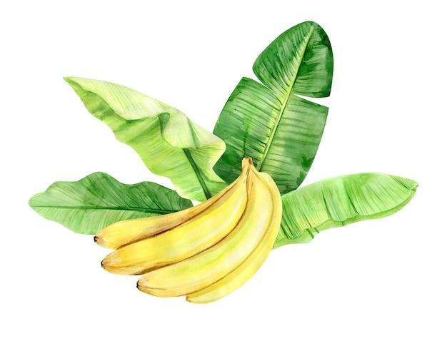 Ilustração em aquarela, folhas de palmeira de banana tropical e frutas