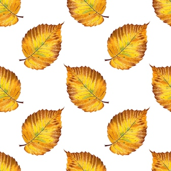 Ilustração em aquarela padrão outono folha amarela de olmo impressão
