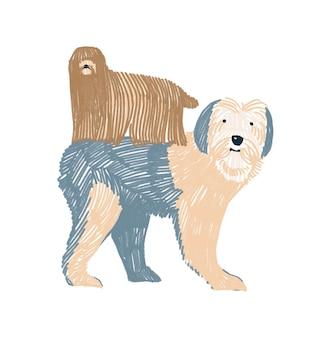 Ilustração infantil desenhada à mão dois cães isolados no fundo branco postal de cão bobtail