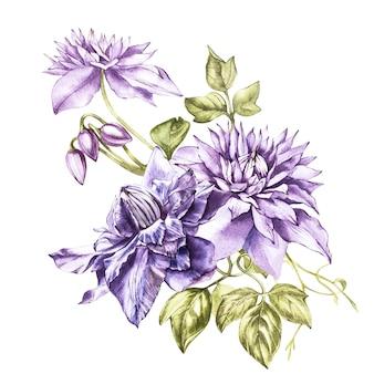 Ilustração na aquarela de uma flor da flor da clematite. cartão floral com flores. ilustração botânica.
