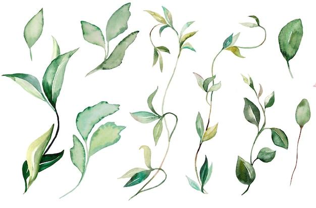 Ilustrações de plantas e folhas em aquarela