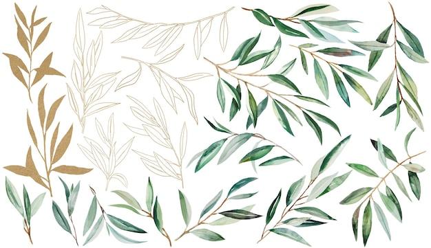 Ilustrações em aquarela de ramo de oliveira verde e dourado