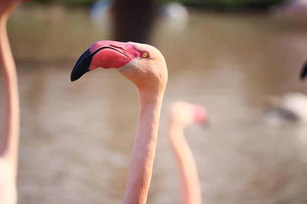 Imagem aproximada da cabeça de um flamingo rosa em frente à água