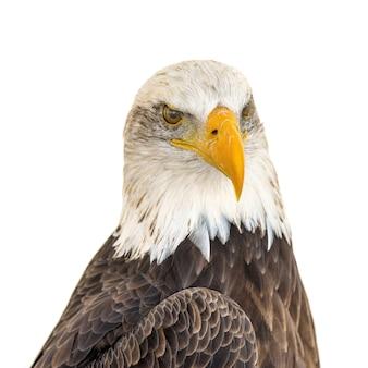 Imagem aproximada da cabeça de uma águia majestosa