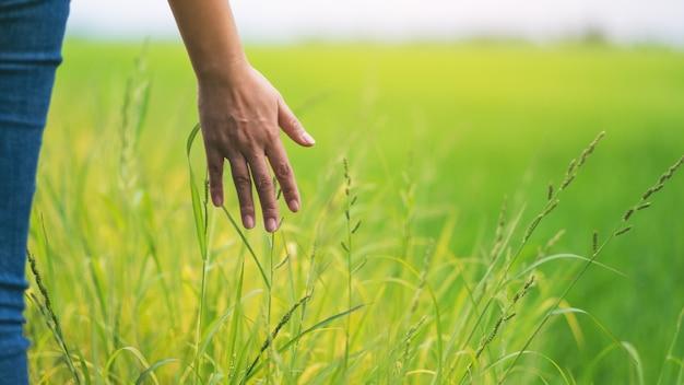 Imagem aproximada da mão de uma mulher tocando o arroz em um campo