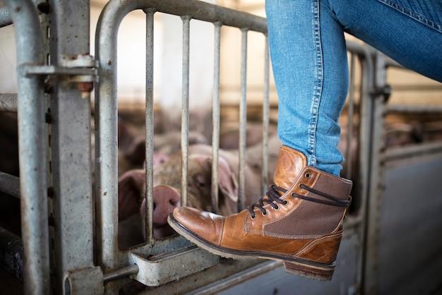 Imagem aproximada da perna e das botas do fazendeiro apoiadas na gaiola enquanto os porcos comem no fundo