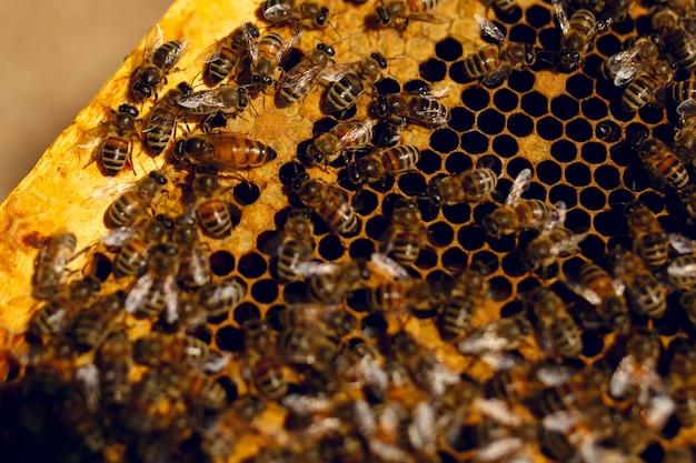 Imagem aproximada das abelhas trabalhando em células de mel