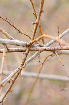 Imagem aproximada de galhos da árvore emaranhados