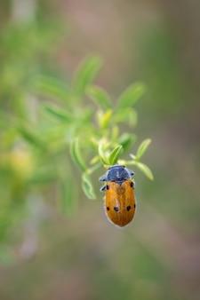 Imagem aproximada de um besouro em uma planta