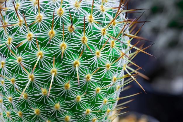 Imagem aproximada de um cacto verde brilhante