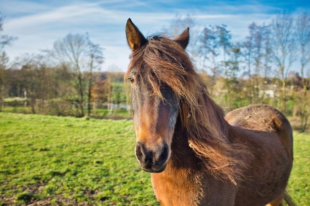 Imagem aproximada de um cavalo castanho no campo