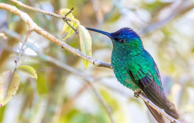 Imagem aproximada de um colibri em um galho de árvore