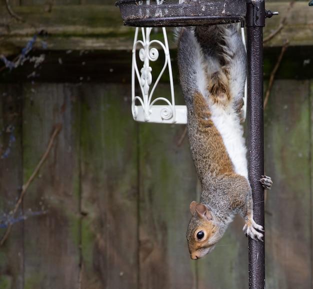 Imagem aproximada de um esquilo fofo