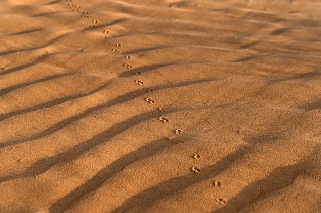Imagem aproximada de um fundo de bela textura de areia