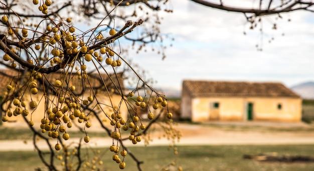 Imagem aproximada de um galho de árvore com edifícios