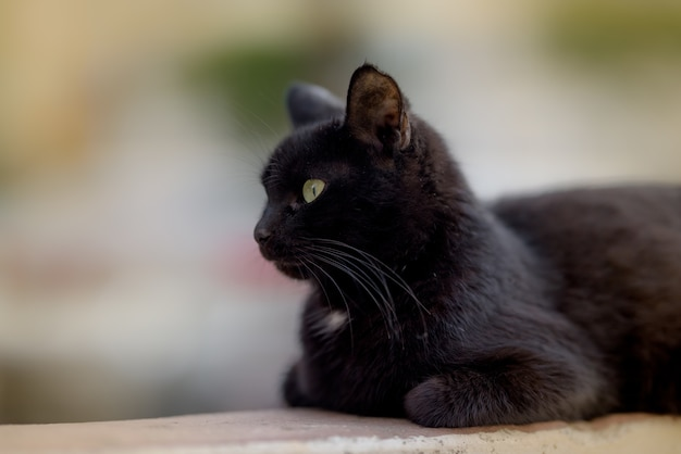 Imagem aproximada de um gato preto deitado calmamente no chão e ignorando completamente a câmera