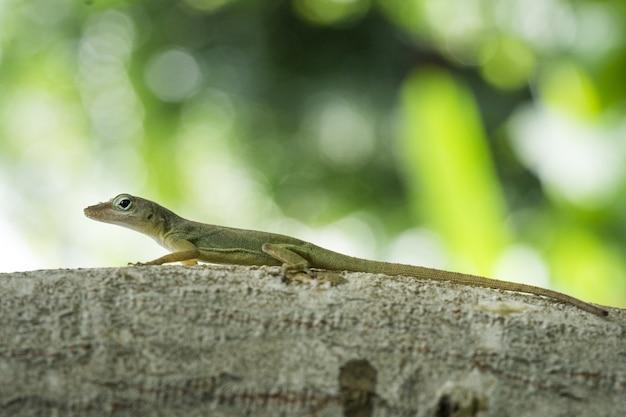 Imagem aproximada de um lagarto em um galho de árvore