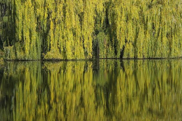 Imagem aproximada de um lago refletindo as belas árvores coloridas de outono em um parque
