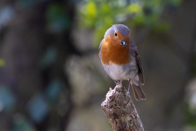 Imagem aproximada de um pardal empoleirado em um galho