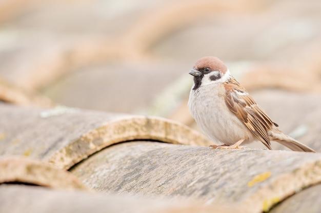 Imagem aproximada de um pardal parado no cano