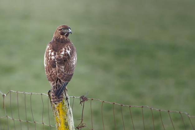 Imagem aproximada de um pássaro falcão